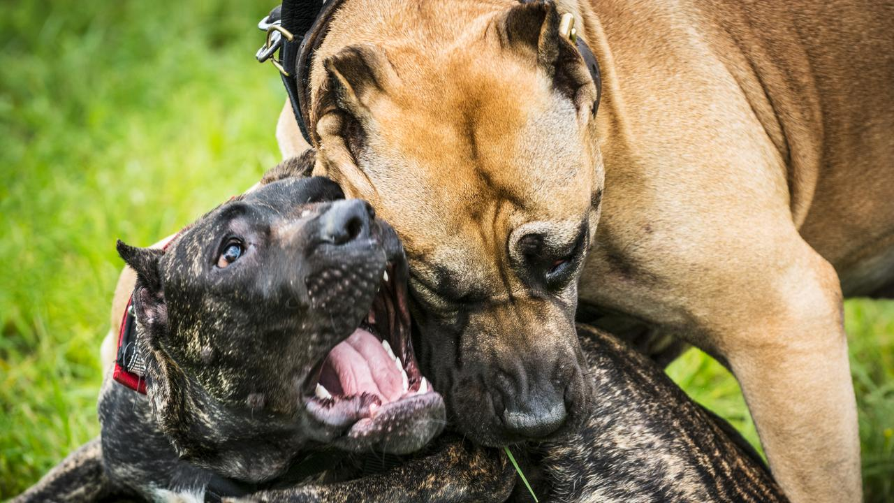 Sunshine Coast Council authorised officers were granted the right to inspect private properties where regulated dogs are registered.