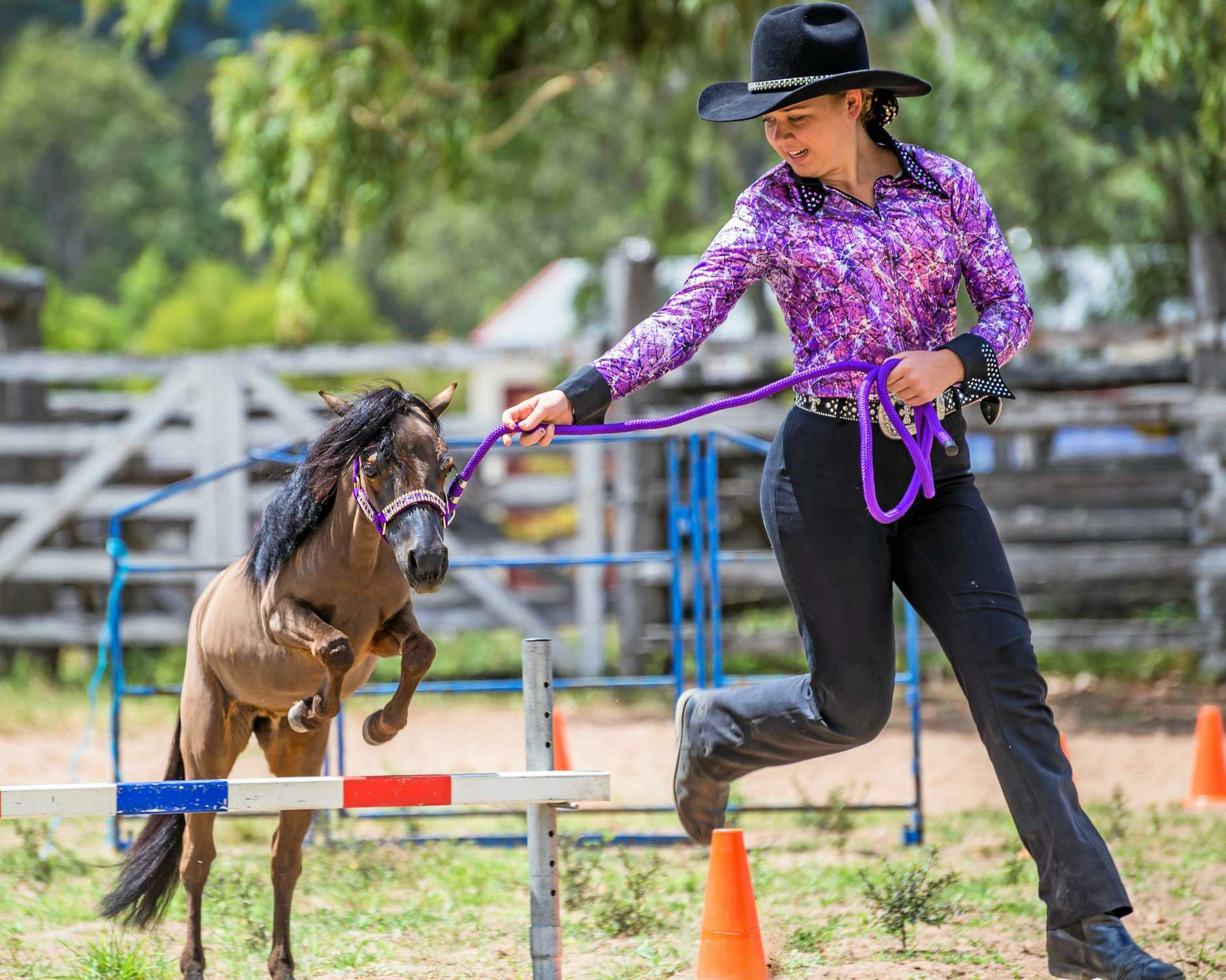 Jessica Tome putting her miniature horse through its paces last Saturday.  (Photo contributed by Sarah Sullivan Photography)