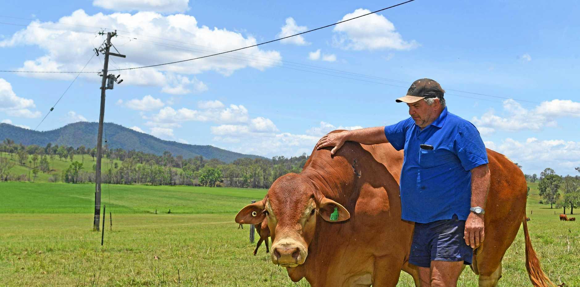 Ross McClymont is a grazier at Woolooga.