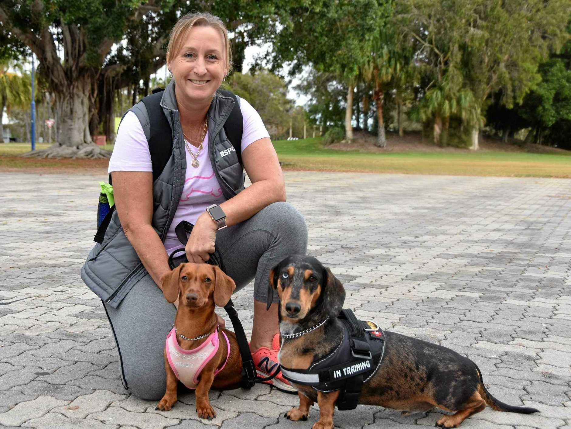 MORNING STRUTT: Tina Underwood with 'Abby' and 'Dude' at the first Gladstone Animal Rescue Group's Strut 4 Mutts fundraiser walk
