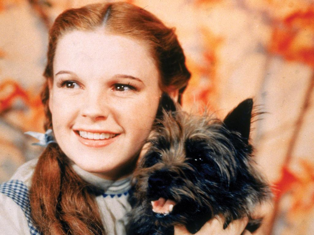 Actor Judy Garland and Terry, the dog (aka Toto) in a scene from the Wizard of Oz. The 2020 Gladstone combined schools musical will perform the iconic tale.