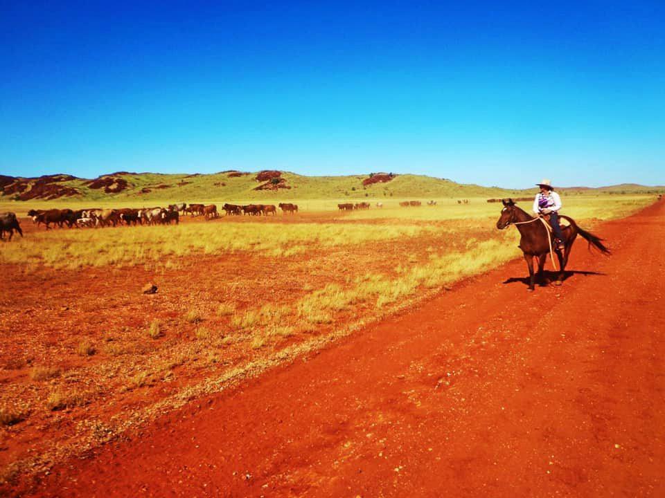 Mustering in the West Pilbara, Western Australia
