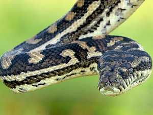 Good Samaritan snake rescuer dodges $39k fine, jail time
