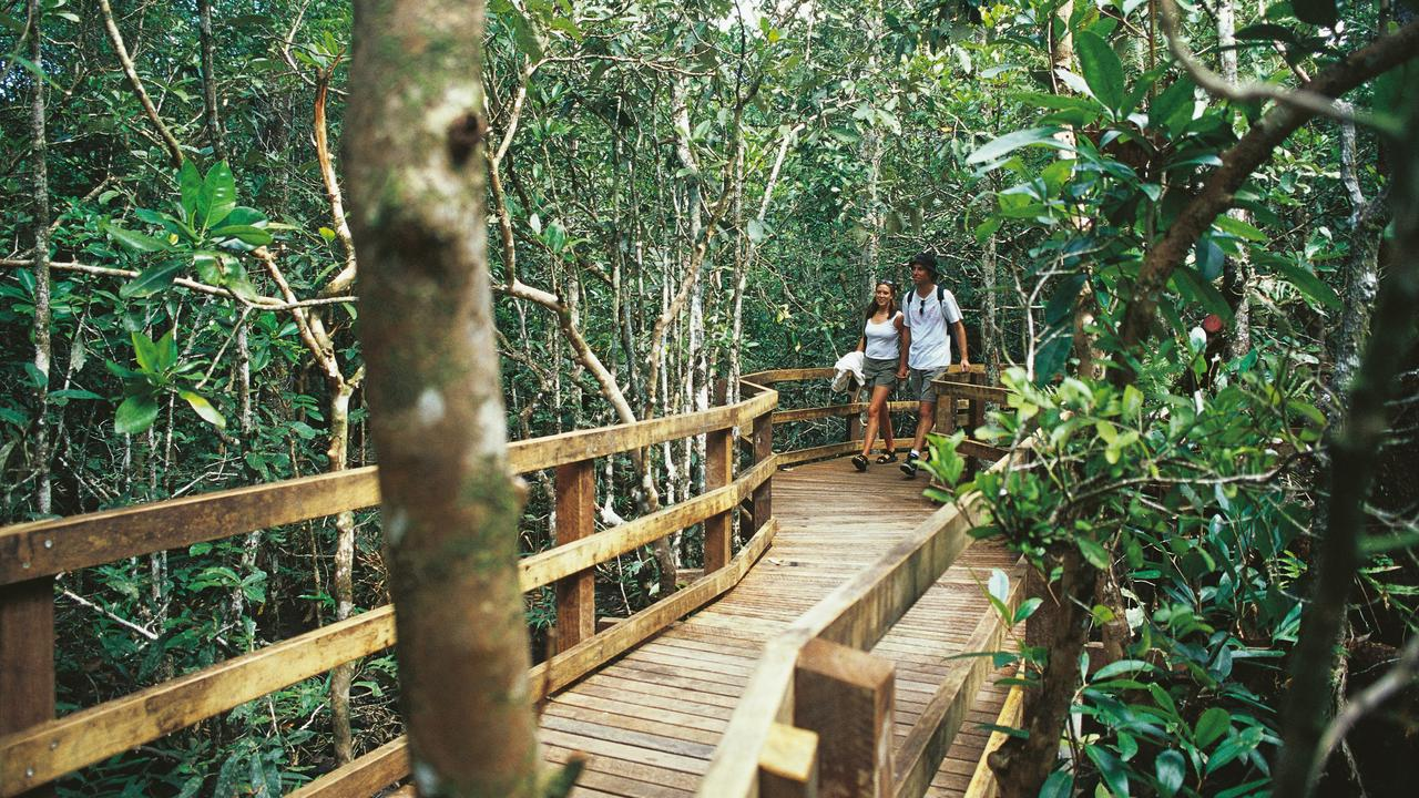 The Madja Botanical Walk in the Daintree National Park has reopened.