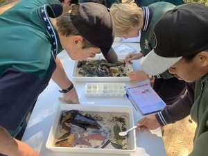 Students feel the buzz with Australia-first science program