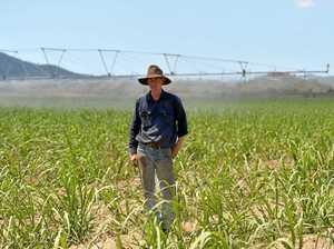 Latest sugar blow stuns region's cane growers