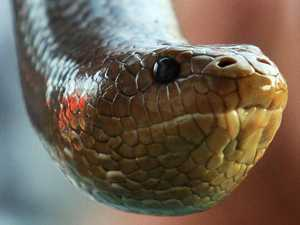 Woman hospitalised after suspected snake bite