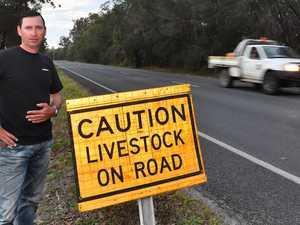 CARS CRUSHED: Loose livestock puts lives in danger