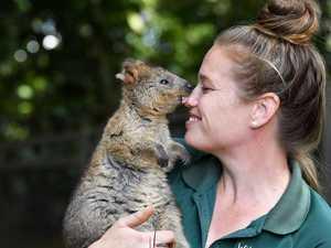 Zoo program will boost 'happiest animal' population