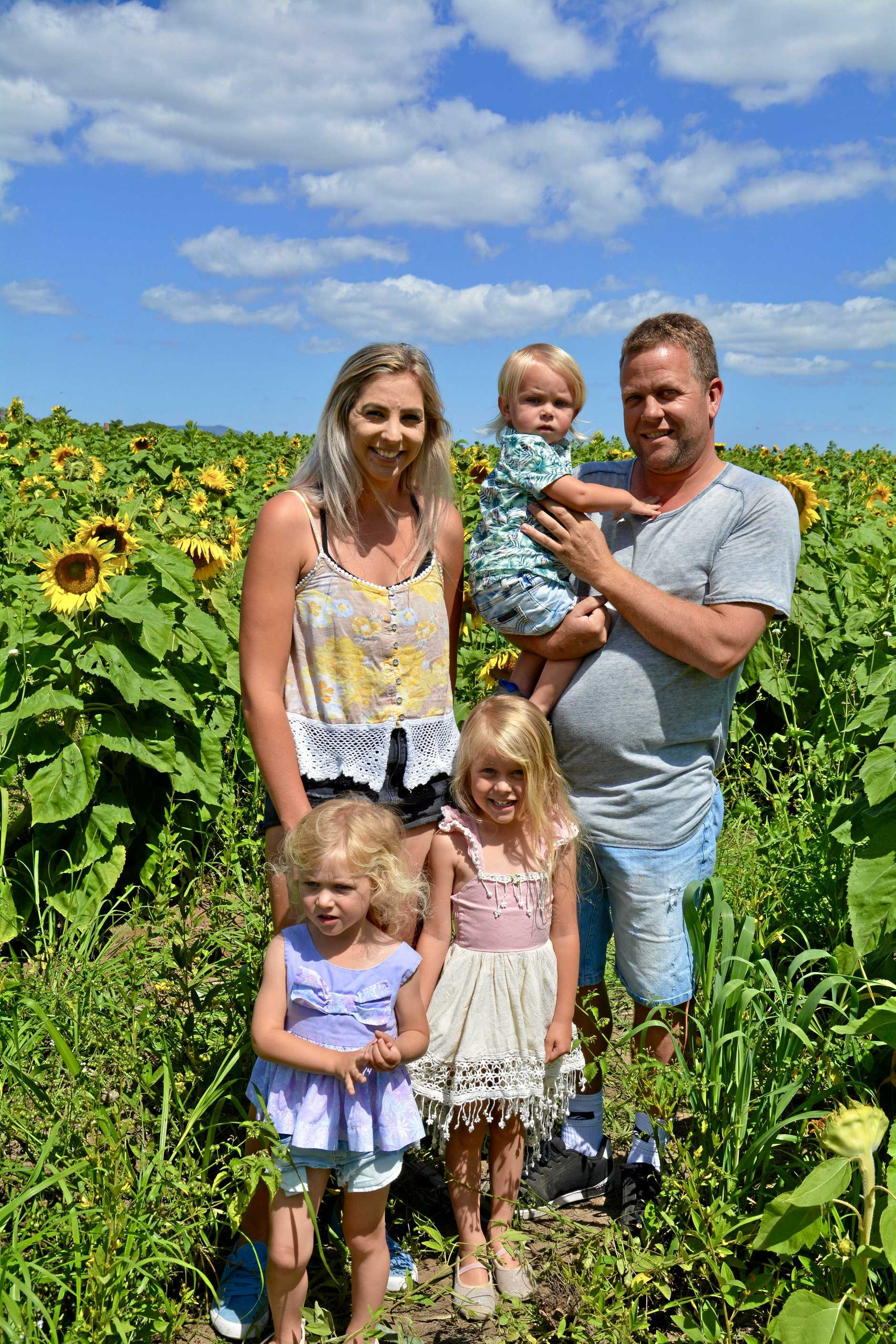 Cannon Valley's Sam McKerrow celebrated Father's Day, and his birthday, wandering through the sunflower farm at Marian with his partner Belinda Johnson and children Eden, 3, Indigo, 5, and Lukas, 18 months.
