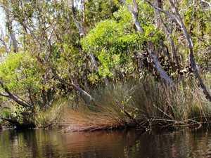 Overturned kayak found in creek
