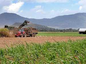 Reef bill the last straw for Mount Ossa cane farmer