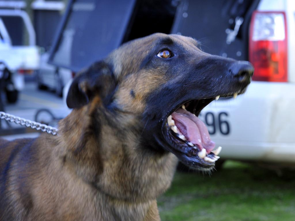 A dog squad was called in to apprehend a man charged with allegedly evading police on a stolen motorbike overnight.
