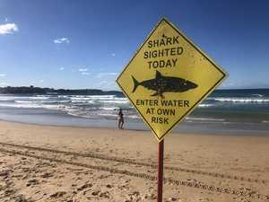 Shark sighting forces closure of popular beach