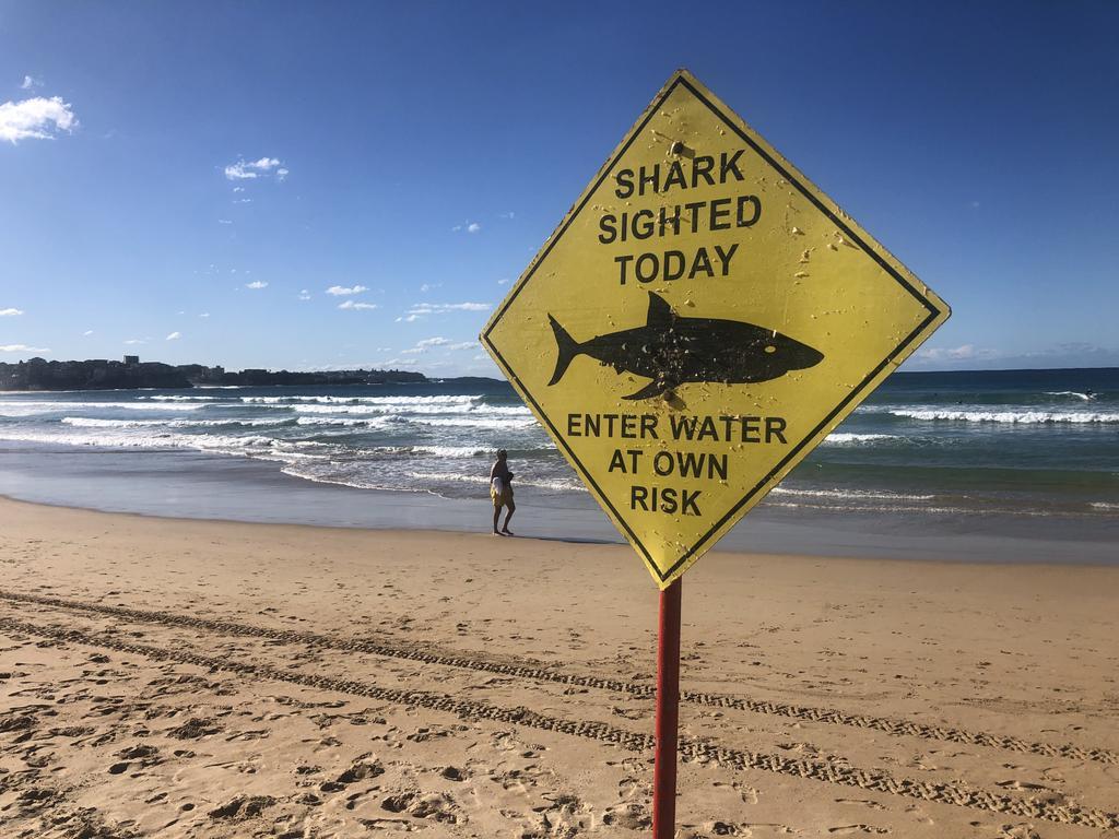 Shark sighting at Sunshine Beach yesterday.