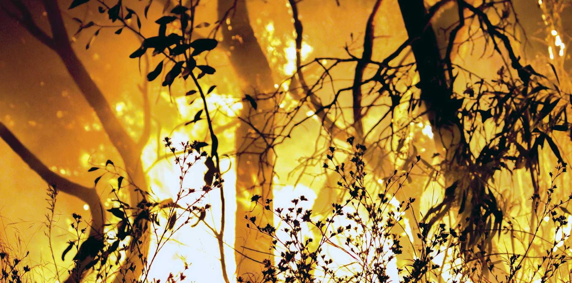 DANGER ESCALATES: 'Severe' fire danger is forecast.