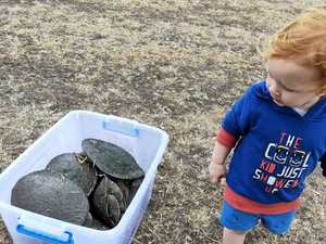 Community bands together to save at risk turtles