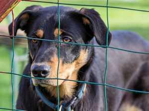 Coast dog baiters face hefty fines, jail under LNP laws