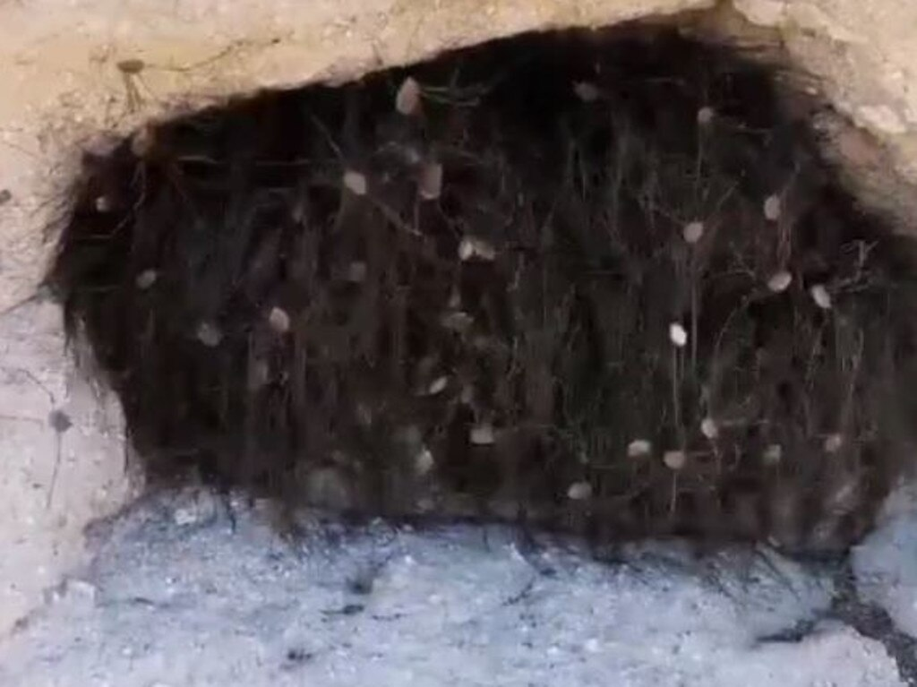 Bodies begin to emerge from the nightmarish tangle of spider legs. Hundreds and hundreds of spider legs. Picture: YouTube