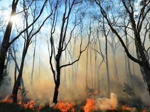 Fast-moving bushfire burning in dense plantation area