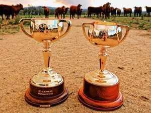 PHOTOS: Melbourne cups come to Grafton