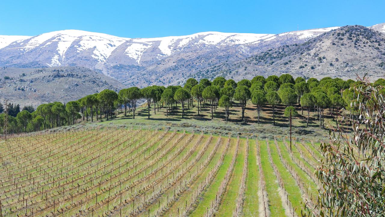 Vineyards in Kefrayya, Lebanon. Photo by Areej Khaddaj from Shutterstock.