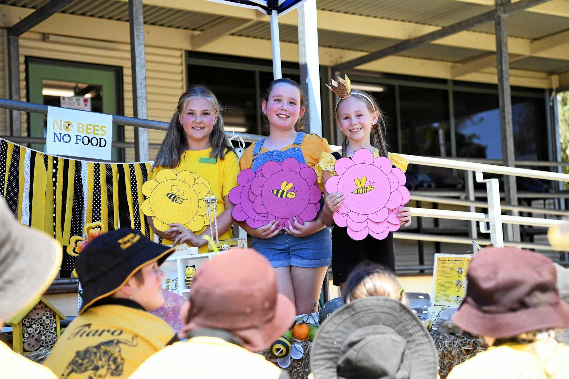 Kids teaching kids - Year 4 students (L) Shelby Box, Jaylee Pearse and Xanthe Schjivens teaching other kids about the importance of bees in our ecosystem.