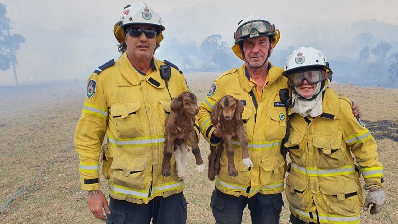 Baby goats saved from a remote property near Dorrigo.