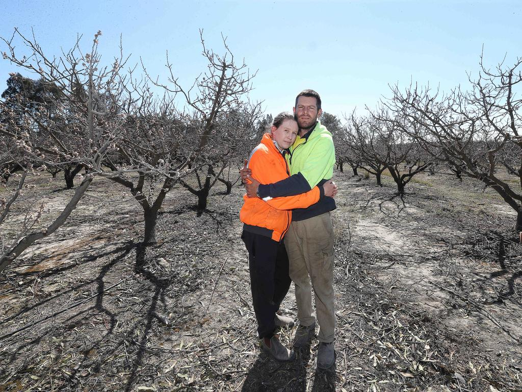 Anthony and Evelyn Giacosa at their apple farm that was ravaged by fire in Applethorpe. Picture: Annette Dew