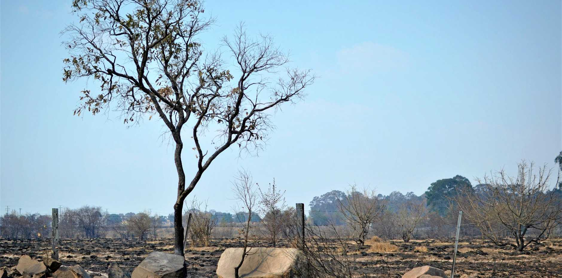 Burnt landscape in Ballandean.