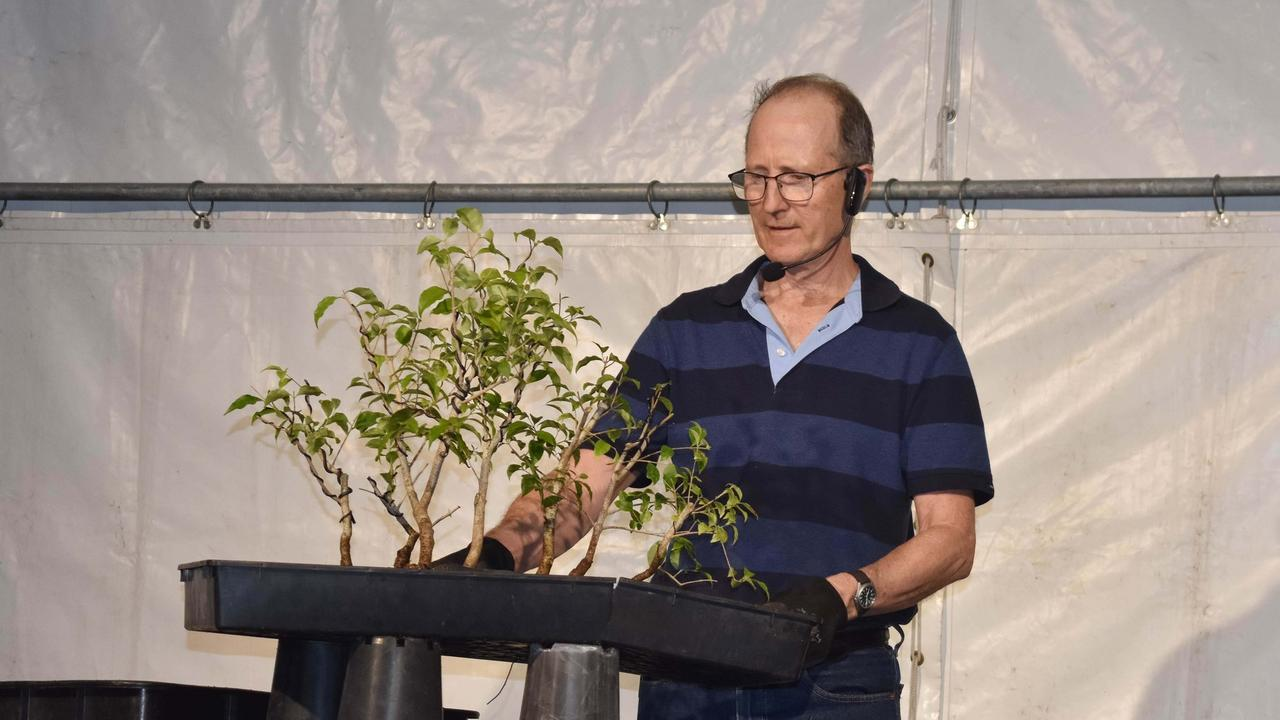 Stephen Cullum's presenting at the Bonsai exhibit at the Gladstone Multicultural Festival.
