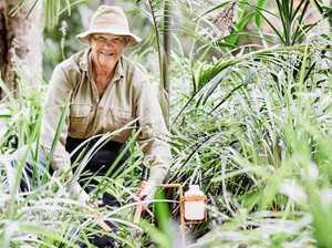 Supporting the rejuvenation of Big Scrub rainforest