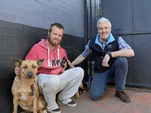 Vet offers helping hand to homeless Toowoomba pets