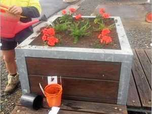 Flower thief ruins blooming Warrego Hwy attraction