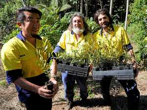 Help restore the Big Scrub along Wilsons River
