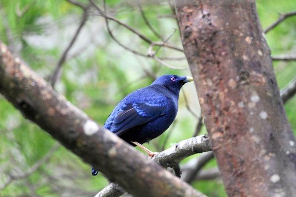 OUTRAGE: The EPA is seeking assistance from members of the public after 15 satin bowerbirds died from chemical poisoning in Modanville. It is believed the birds were targeted.