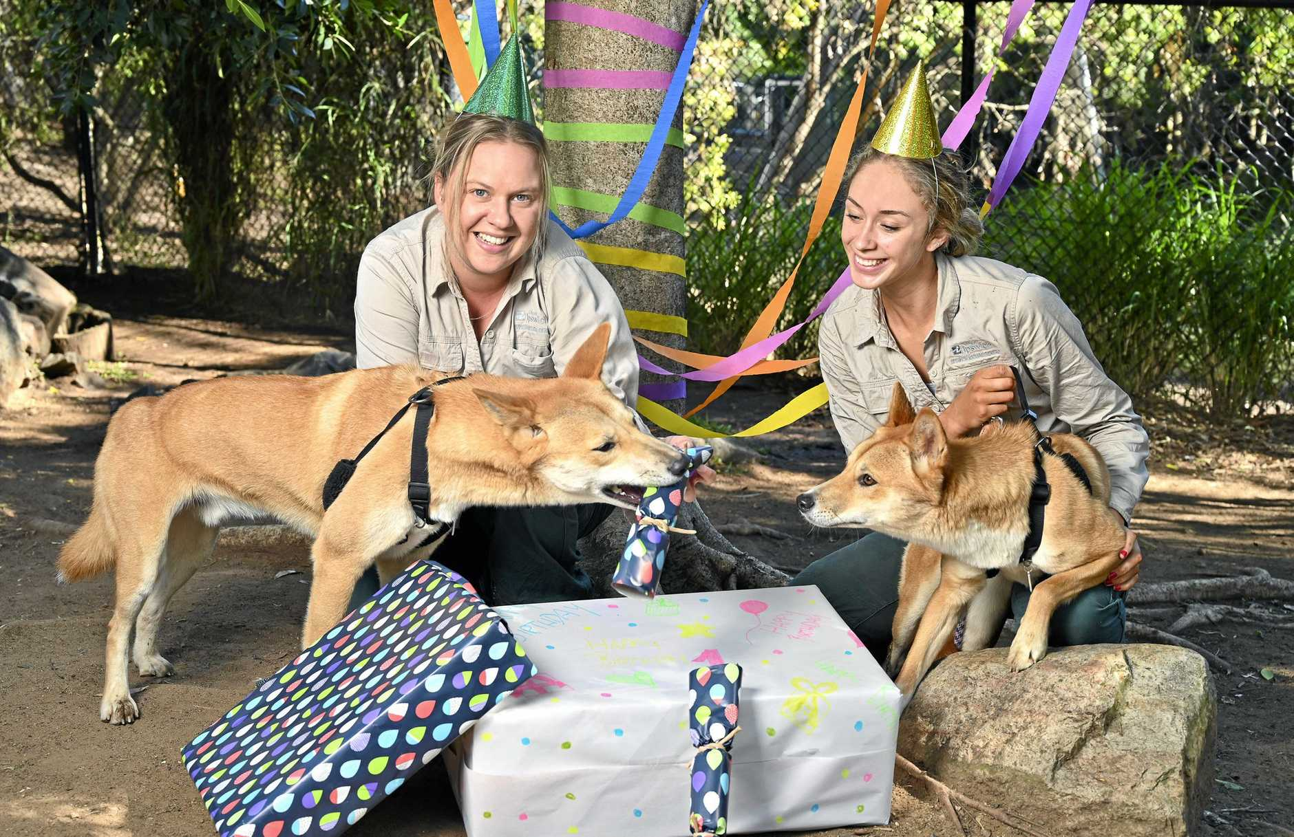 HAVE YOUR SAY: Nicole Richards and Paige Wilson of Ipswich Nature Centre with dingos Lola and Moose.