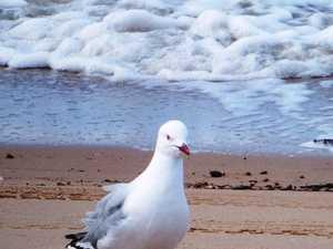 Breezy conditions forecast for Mackay coast