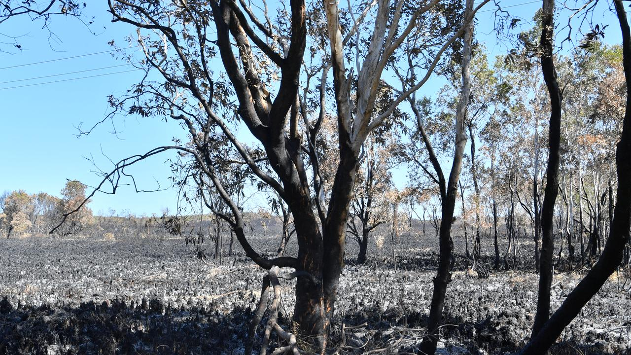 Blackened landscape at Peregian after the fire. Photo: John McCutcheon / Sunshine Coast Daily