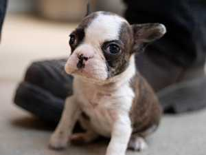When puppy farm victims will be up for adoption