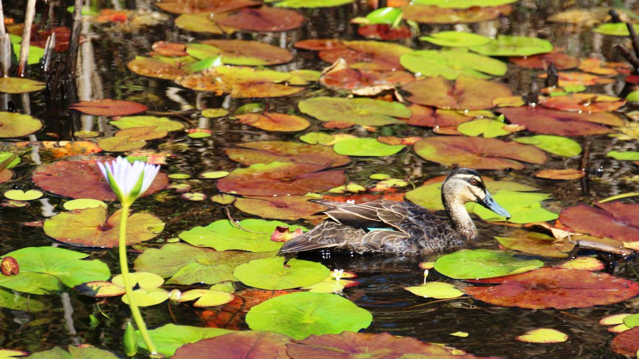 Wallum Lagoon at Kingfisher Bay Resort. Picture: Shirley Sinclair