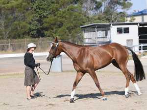 Pacific Coast Arabian Show at Maryborough Showgrounds