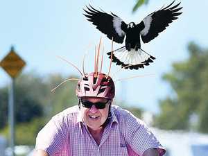 MAGPIE MAP: Coast's swooping danger zones