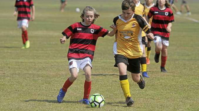 Young Tigers eye Coffs Harbour playoff after grand final win