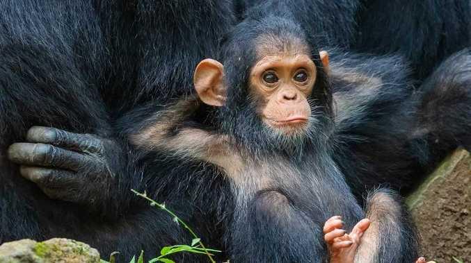 World's funniest animal photos revealed