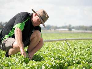 Fruit, veggie growers could go same way as dairy farmers