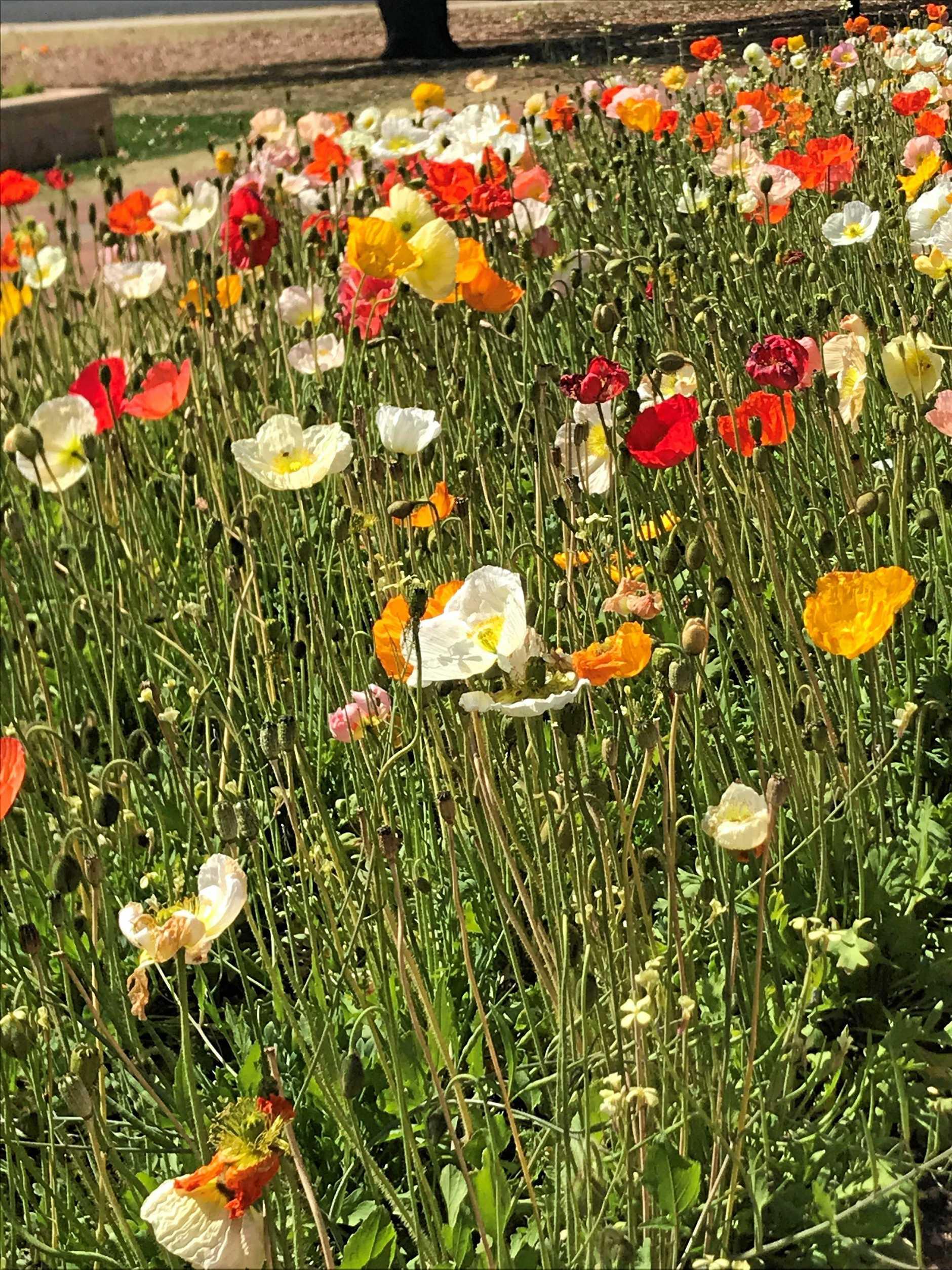 SPRINGTIME: The flowers are blooming in Kingaroy's Memorial Park.