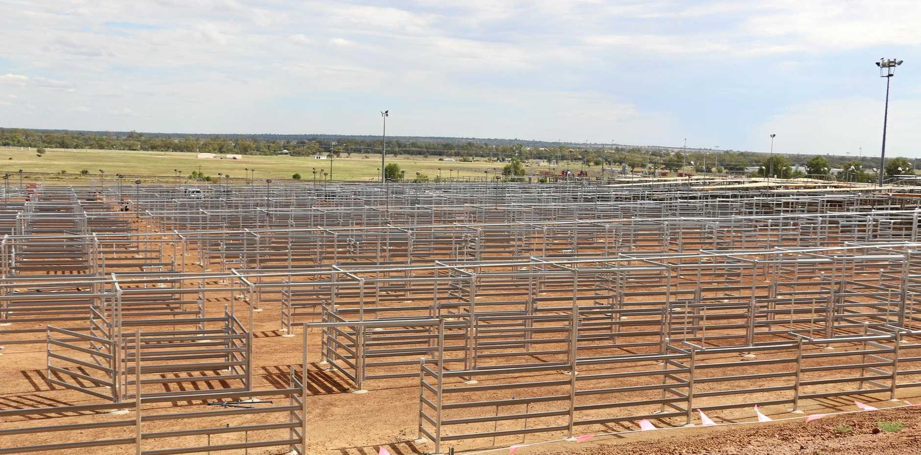 WHERE'S THE BEEF: The $2.173 million Roma Saleyards Improvement Plan Stage 1 project will be officially opened at the Roma Saleyards' 50th anniversary store sale.