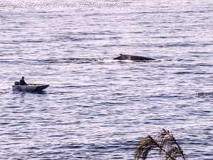 Beautiful photo captures whales swimming past people
