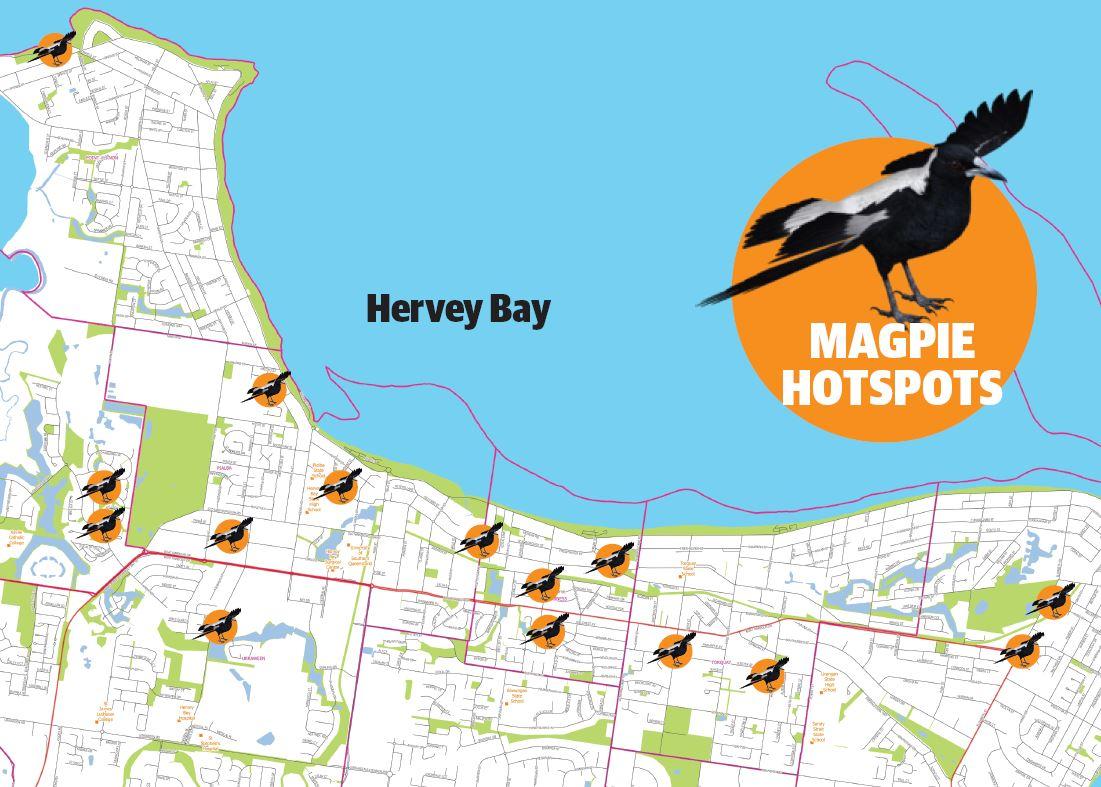 Hervey Bay magpie hotspots